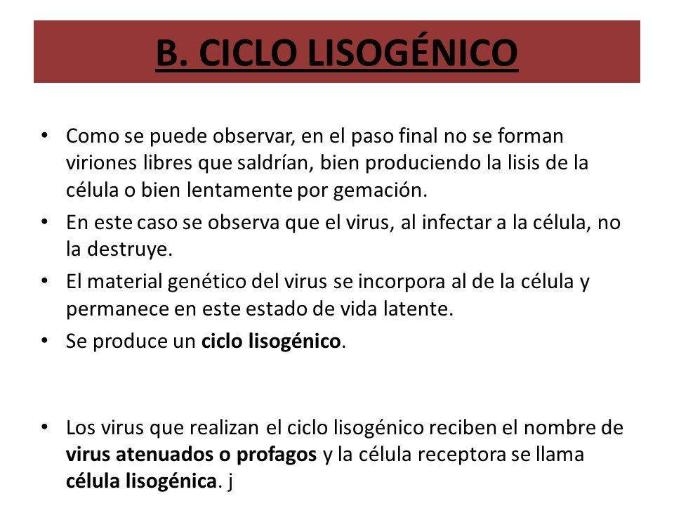 B. CICLO LISOGÉNICO