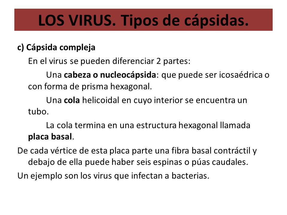 LOS VIRUS. Tipos de cápsidas.