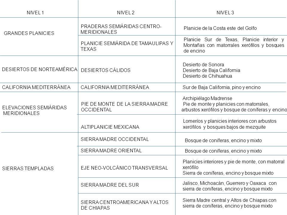 Nivel 1 Nivel 2. Nivel 3. Praderas semiáridas centro-meridionales. Planicie semiárida de Tamaulipas y Texas.