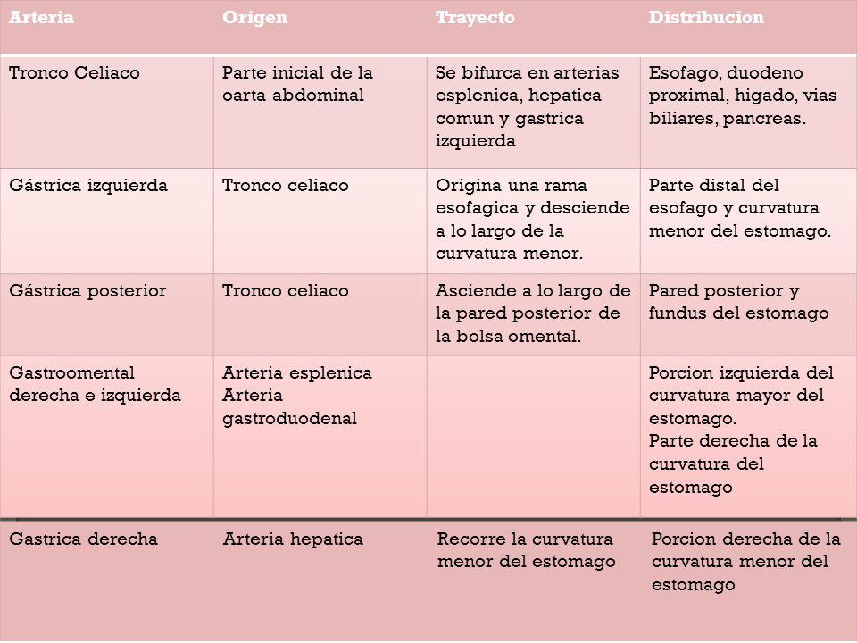 Excelente Anatomía De La Arteria Celíaca Foto - Imágenes de Anatomía ...