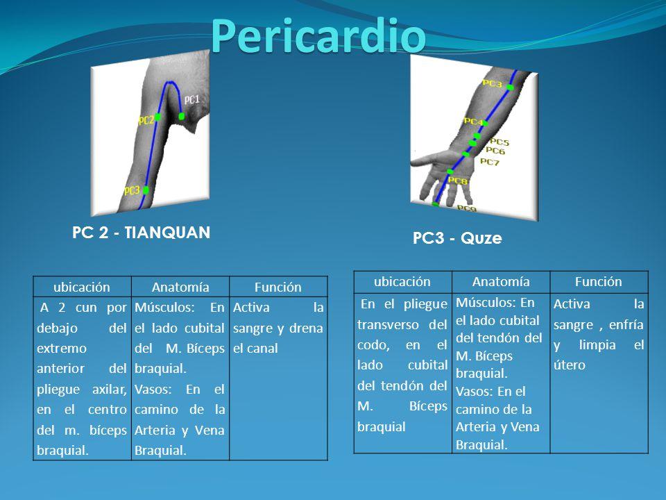 Pulmón Intestino Grueso - ppt descargar