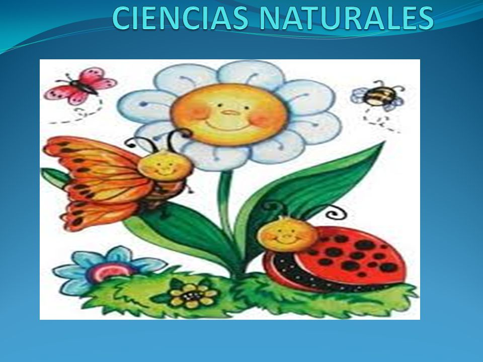 Ciencias naturales ppt video online descargar - Aromatizantes naturales para la casa ...