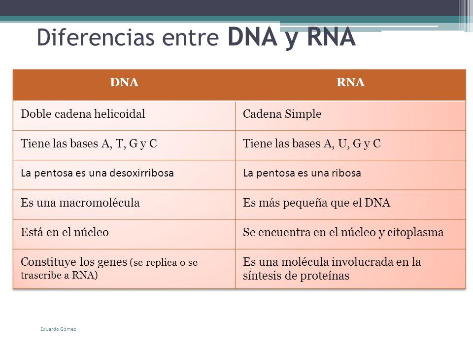 Cidos nucleicos ppt video online descargar for Diferencia entre yeso y escayola