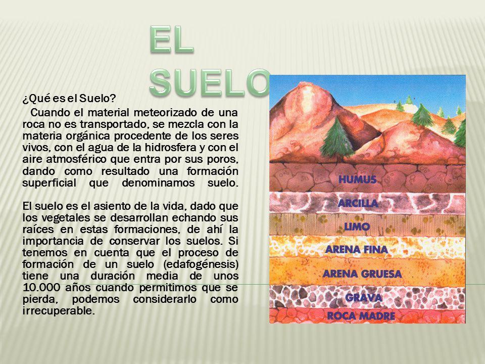 El suelo qu es el suelo ppt descargar for Proceso de formacion del suelo