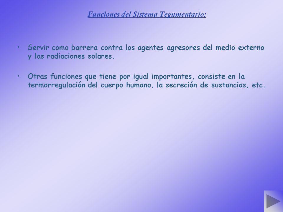 Funciones del Sistema Tegumentario: