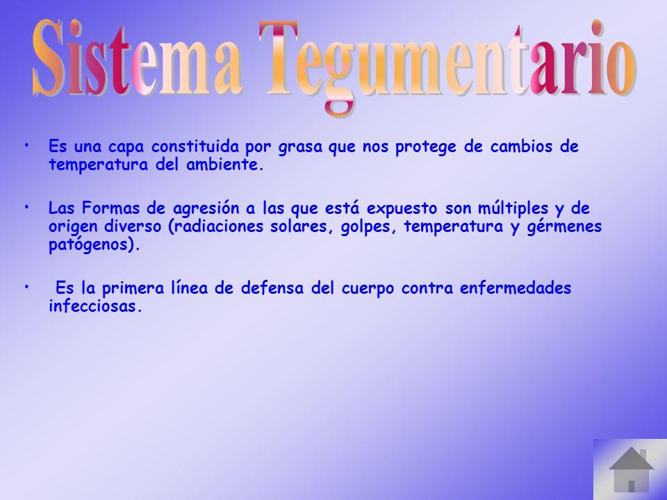 Sistema Tegumentario Es una capa constituida por grasa que nos protege de cambios de temperatura del ambiente.