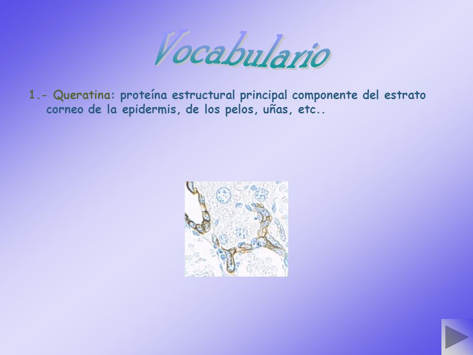 Vocabulario 1.- Queratina: proteína estructural principal componente del estrato corneo de la epidermis, de los pelos, uñas, etc..