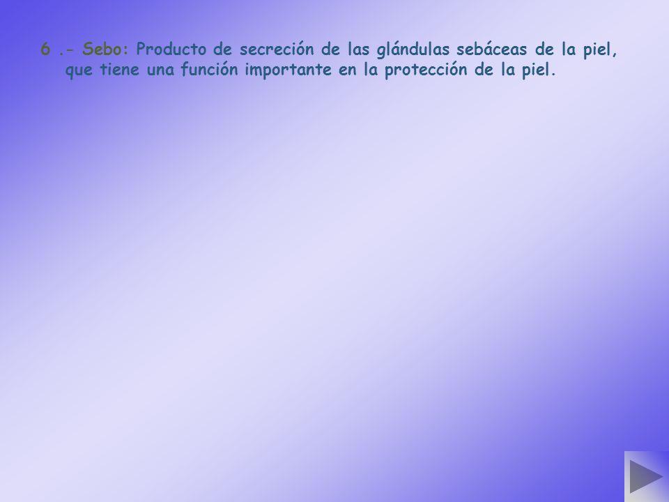 6 .- Sebo: Producto de secreción de las glándulas sebáceas de la piel, que tiene una función importante en la protección de la piel.