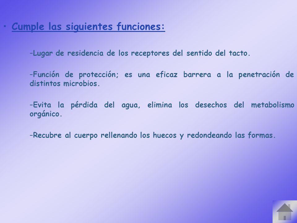 Cumple las siguientes funciones: