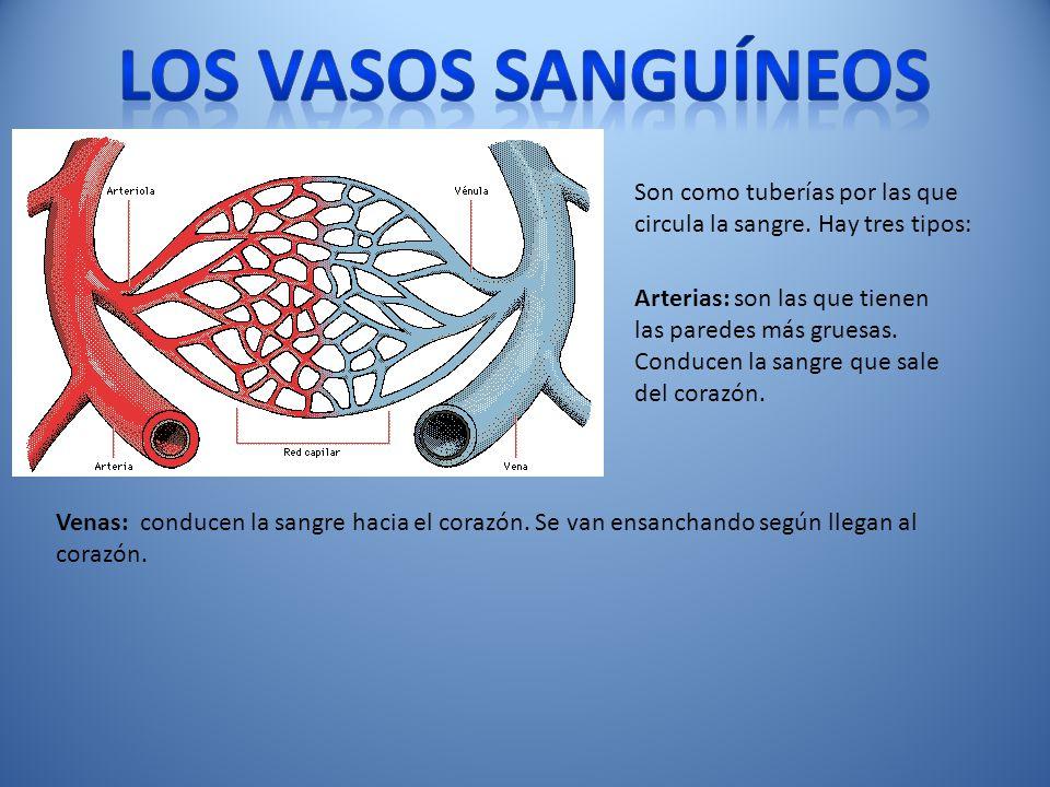 Los vasos sanguíneos Son como tuberías por las que circula la sangre. Hay tres tipos: