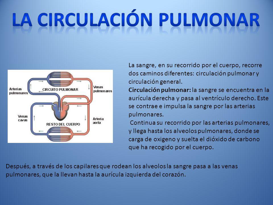 La circulación pulmonar