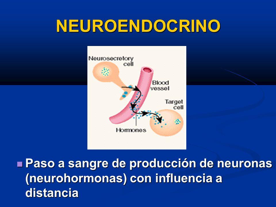 NEUROENDOCRINO Paso a sangre de producción de neuronas (neurohormonas) con influencia a distancia