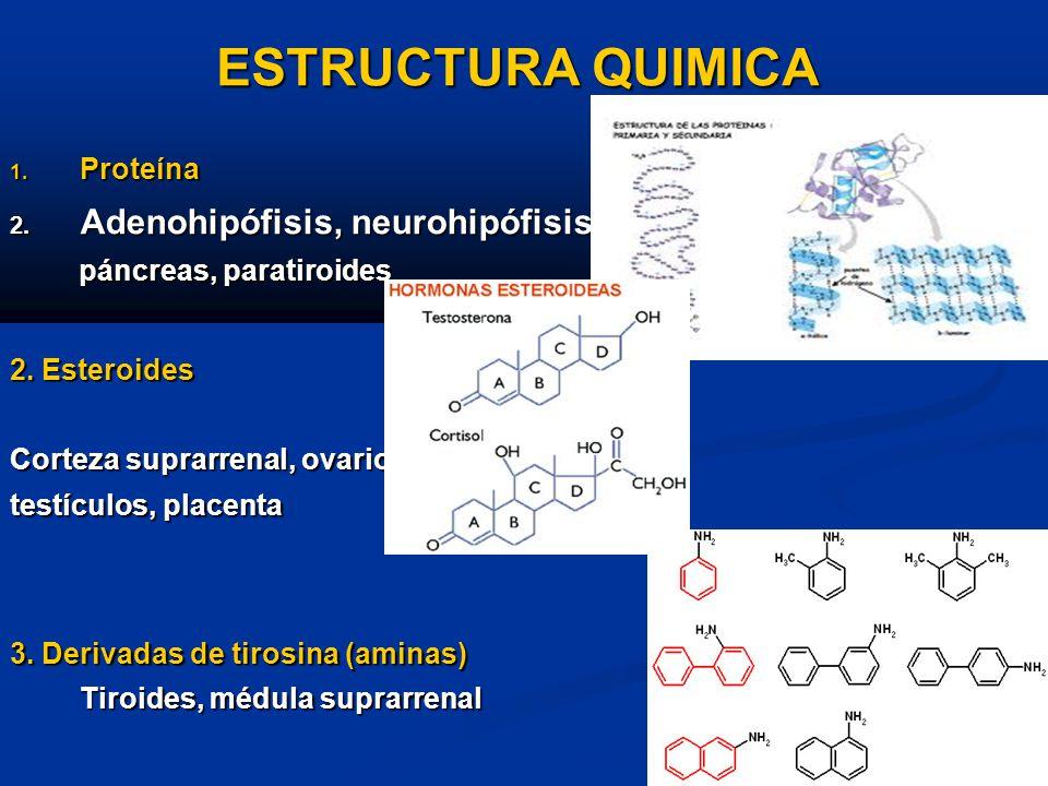ESTRUCTURA QUIMICA Adenohipófisis, neurohipófisis, Proteína