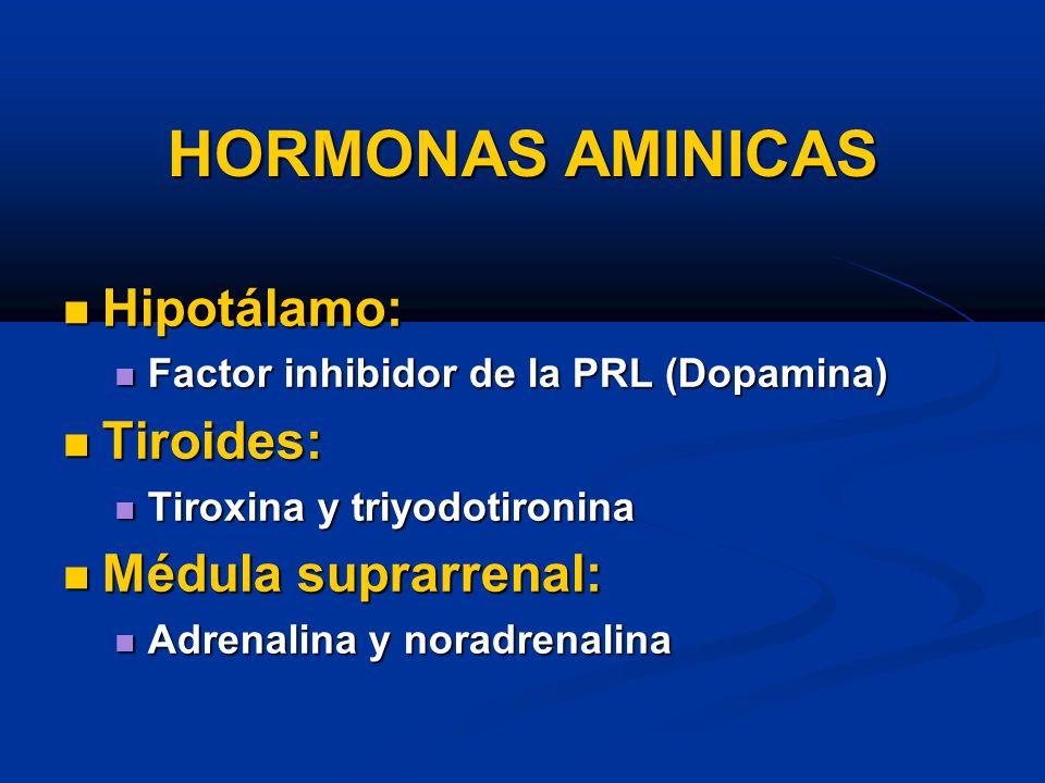 HORMONAS AMINICAS Hipotálamo: Tiroides: Médula suprarrenal: