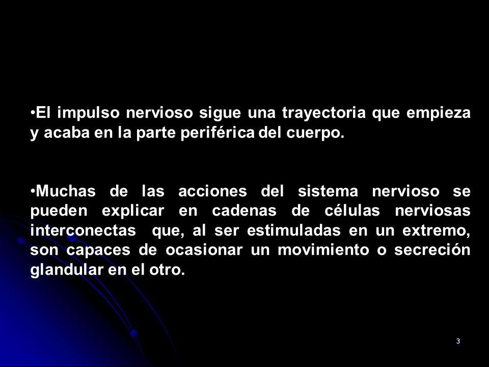 Sistema nervioso El sistema nervioso humano supervisa la actividad ...