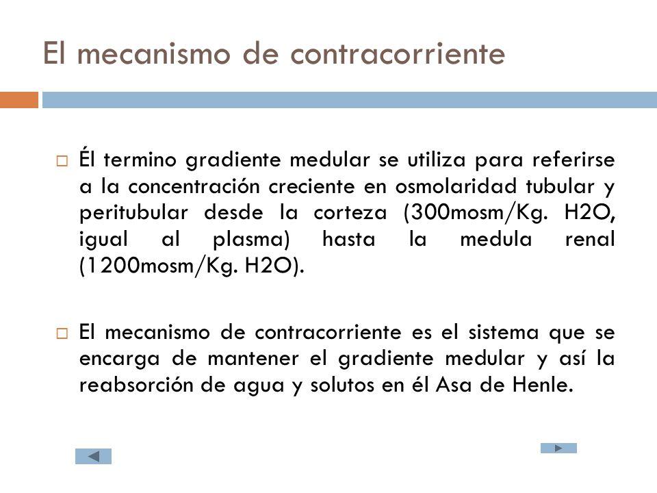 El mecanismo de contracorriente