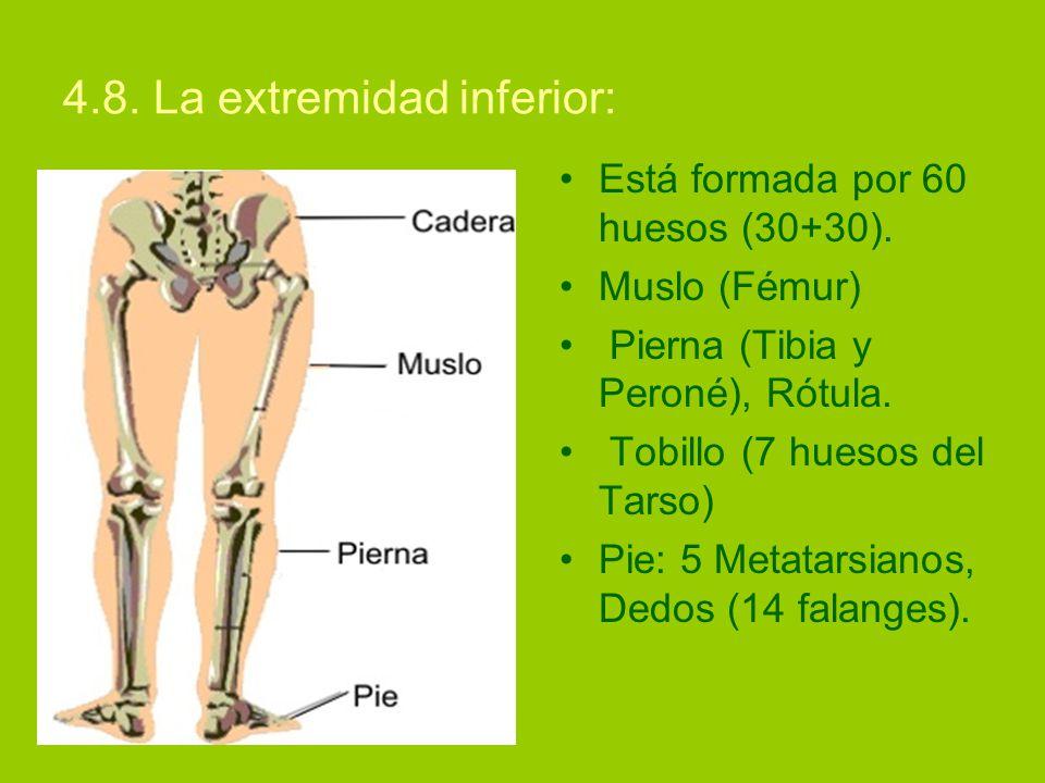 Moderno Huesos De La Pierna Y El Pie Regalo - Imágenes de Anatomía ...
