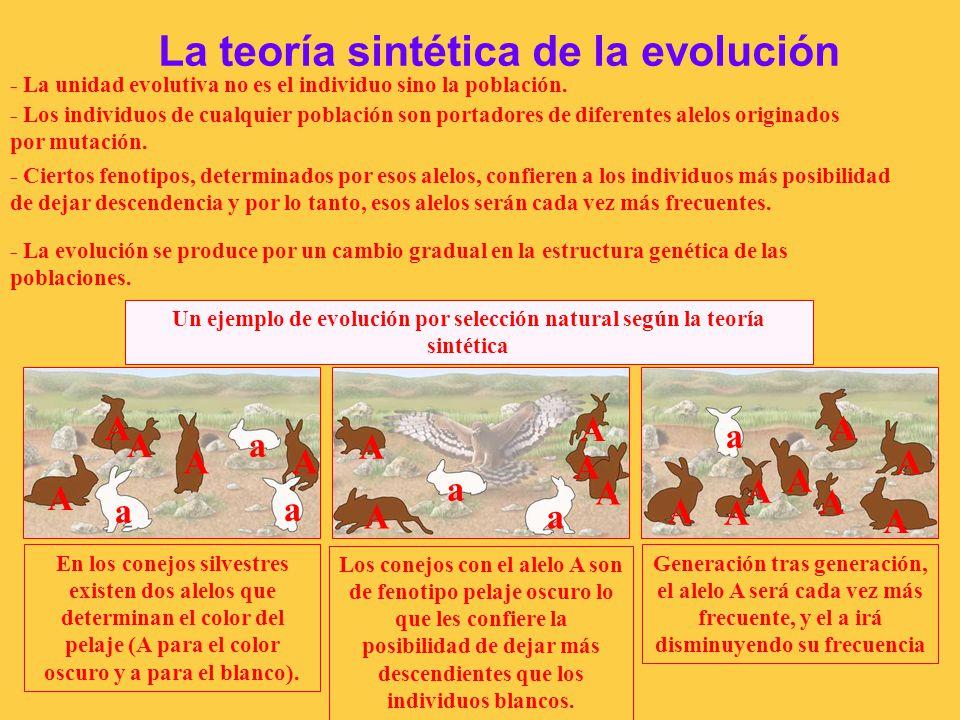 TEMA 4. ORIGEN Y EVOLUCIÓN DE LOS SERES VIVOS - ppt descargar