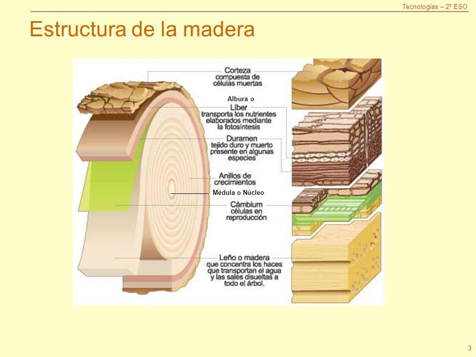 Tema 3 la madera 1 obtenci n estructura y propiedades for Que es la veta de la madera