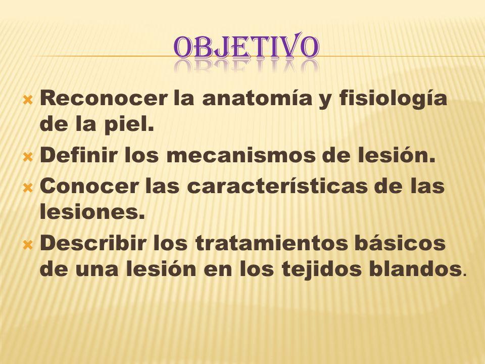 OBJETIVO Reconocer la anatomía y fisiología de la piel.