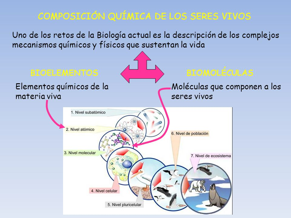Elementos quimicos en los seres humanos