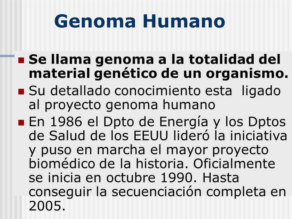 T cnicas de biolog a molecular aplicadas a bioqu mica for En 2003 se completo la secuenciacion del humano
