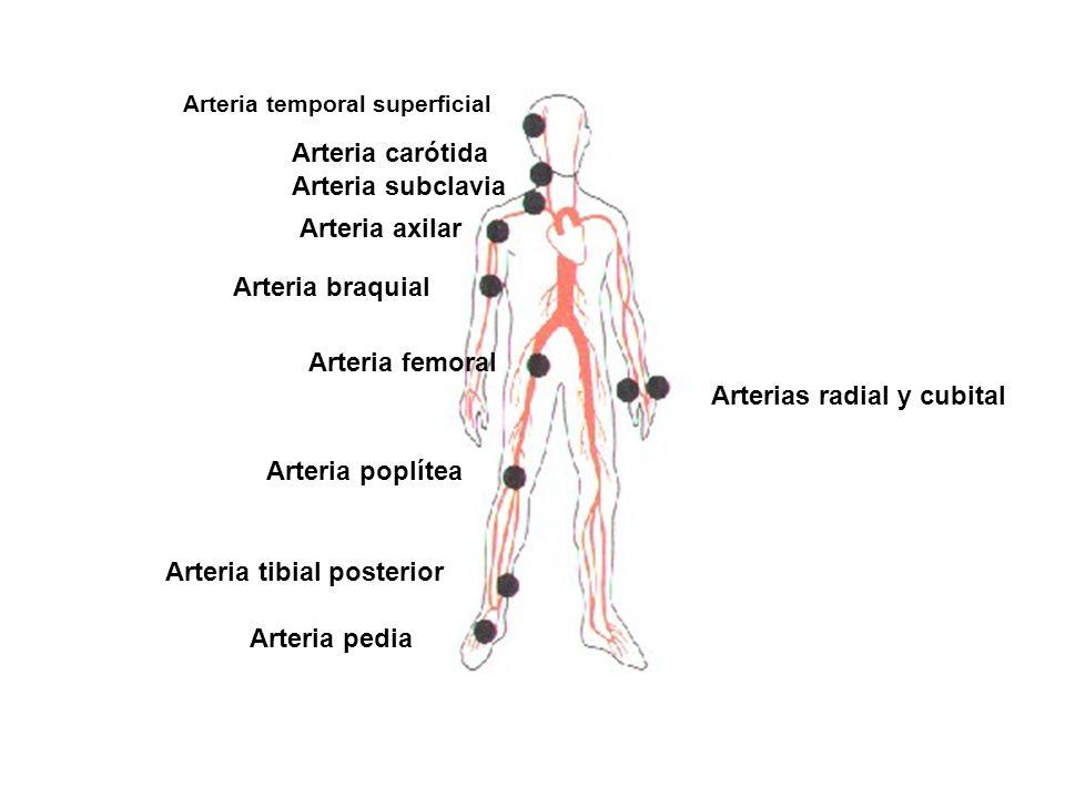 Fantástico Ubicación De La Arteria Carótida Regalo - Anatomía de Las ...