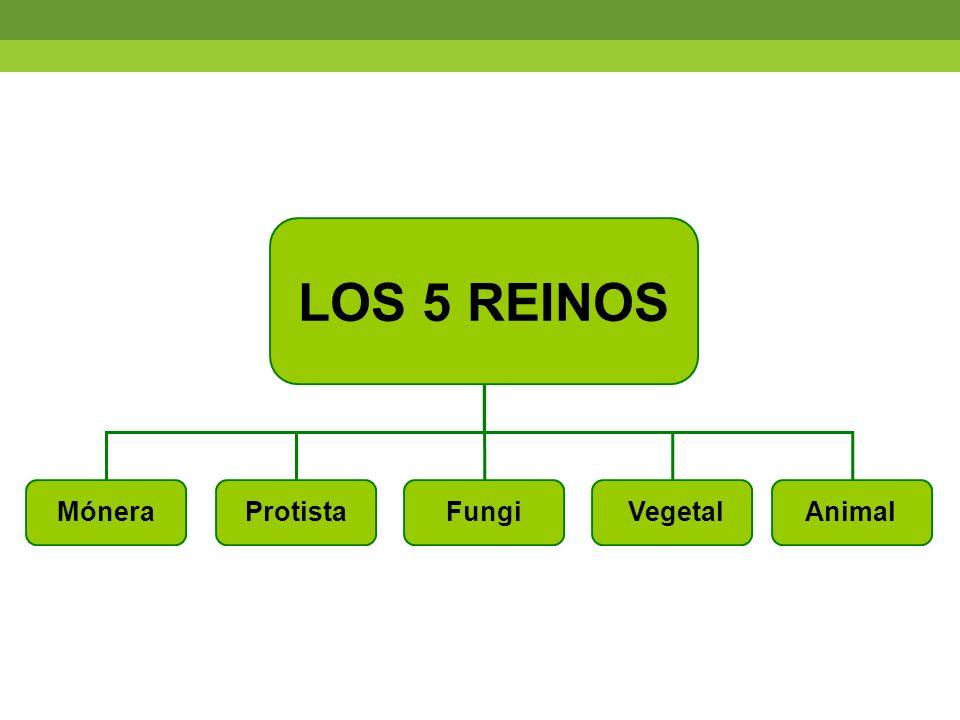 LOS 5 REINOS Mónera Protista Fungi Vegetal Animal