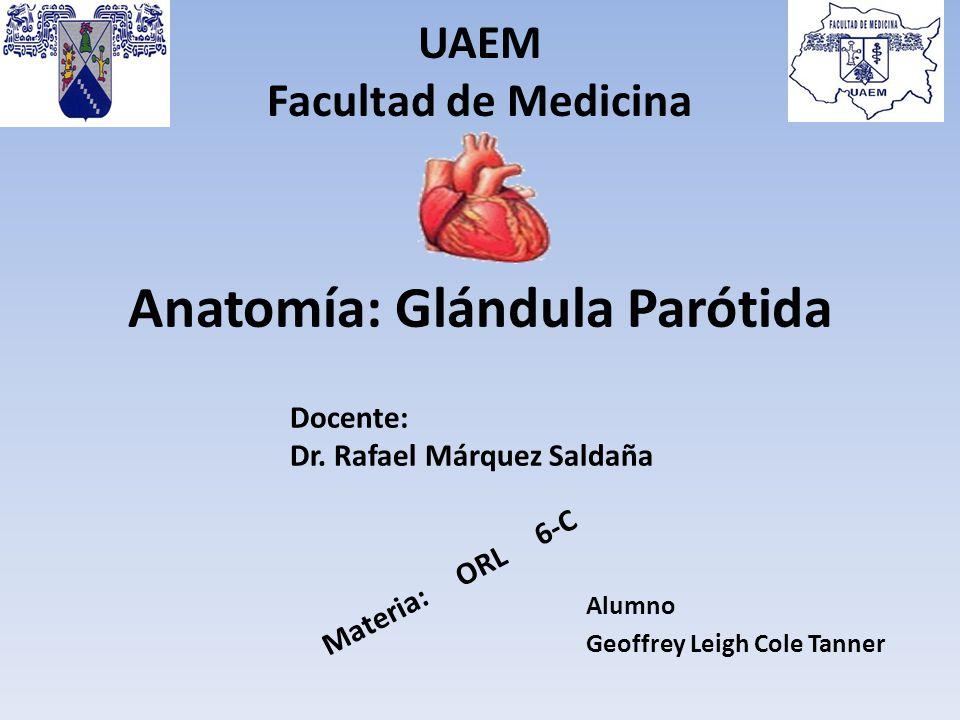 Anatomía: Glándula Parótida - ppt video online descargar