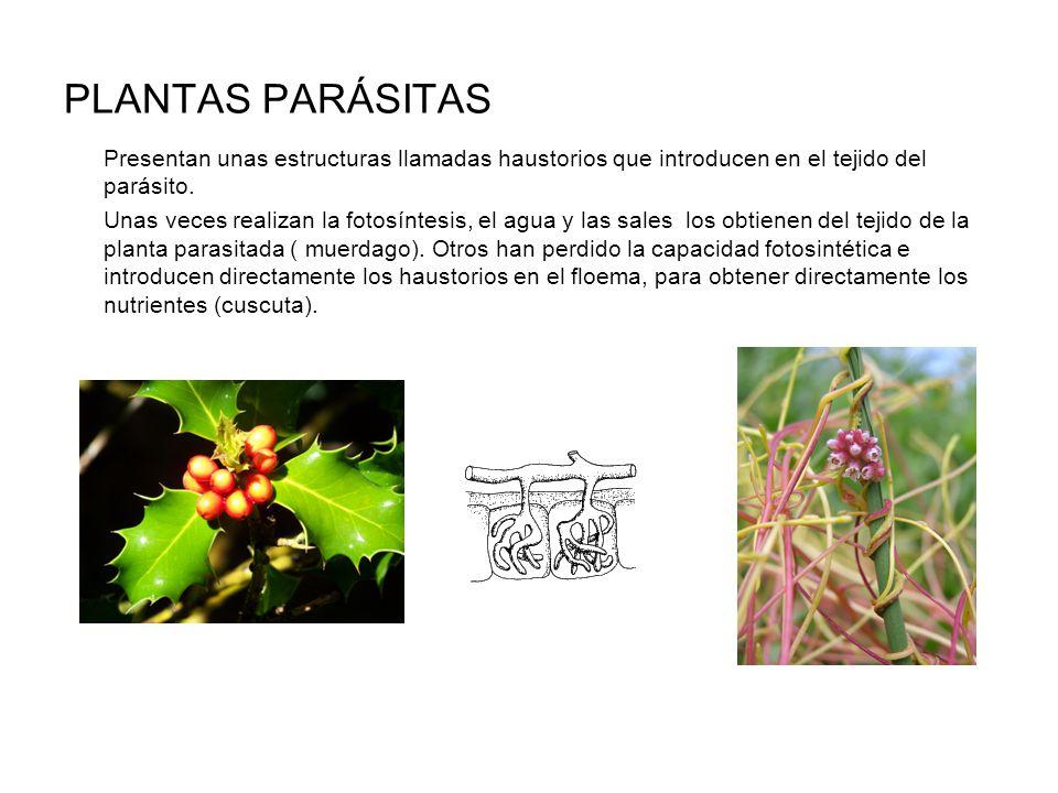 plantas ornamentales concepto diapositivas de plantas
