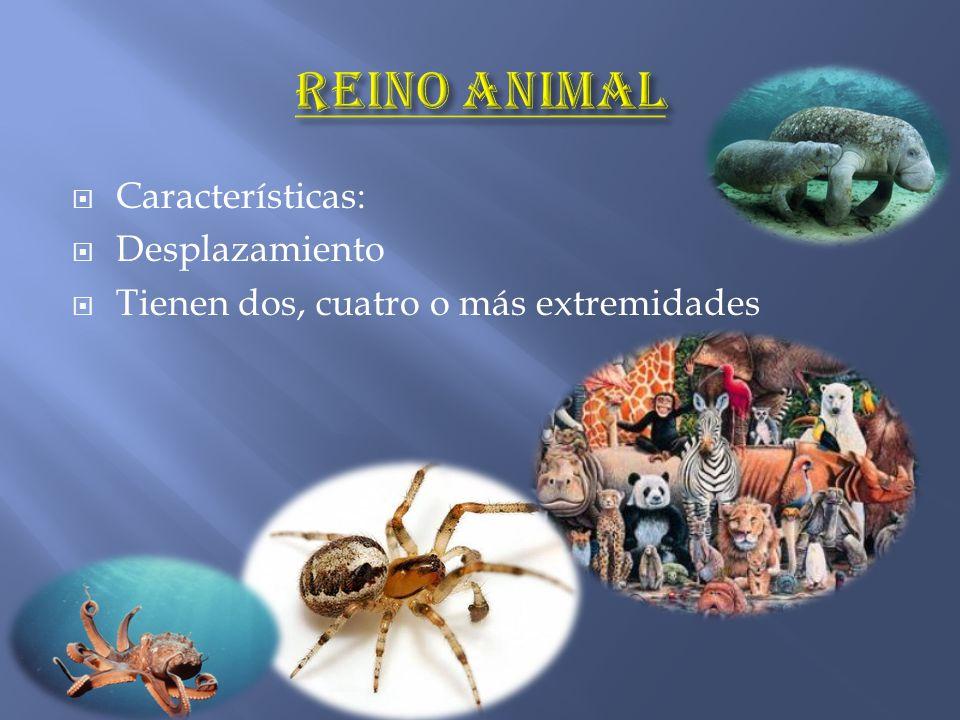 Reino animal Características: Desplazamiento