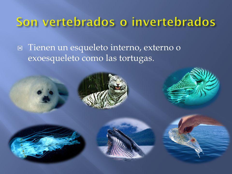 Son vertebrados o invertebrados