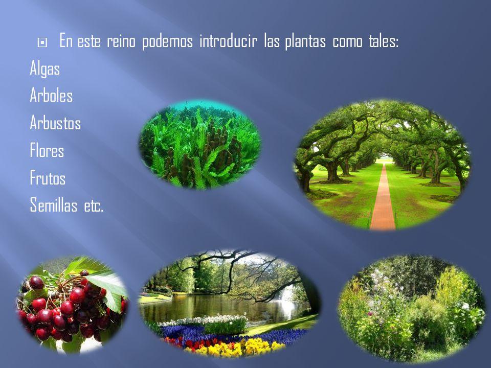 En este reino podemos introducir las plantas como tales: