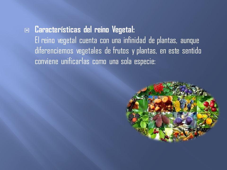 Características del reino Vegetal: El reino vegetal cuenta con una infinidad de plantas, aunque diferenciemos vegetales de frutos y plantas, en este sentido conviene unificarlas como una sola especie: