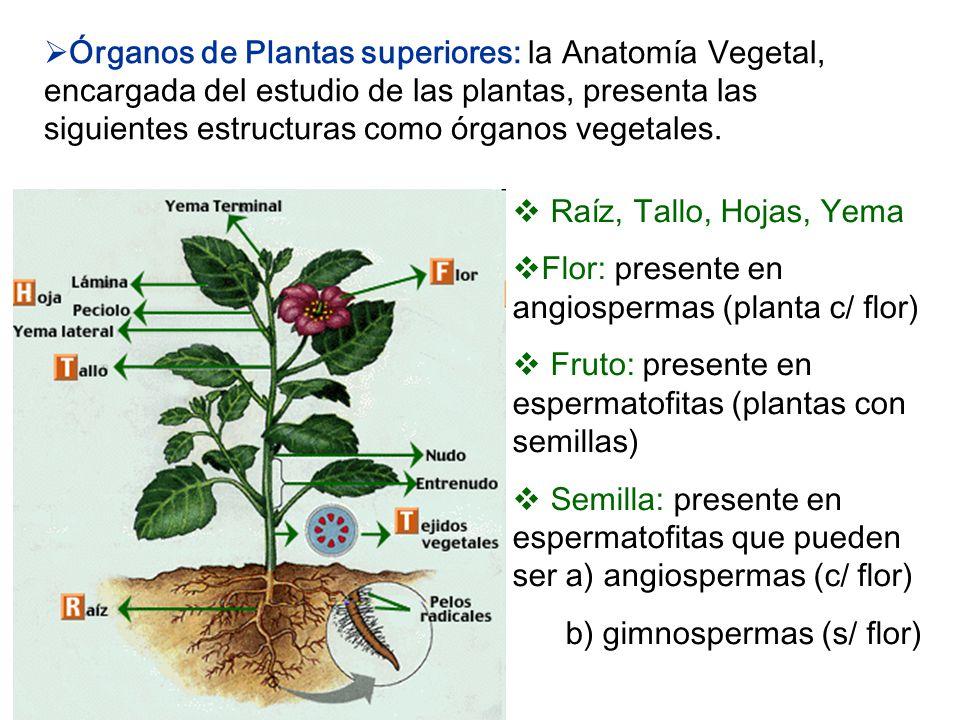 Hermosa Anatomía De Las Plantas De Semilla Galería - Anatomía de Las ...
