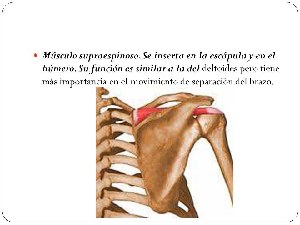 Generalidades del Sistema Muscular - ppt video online descargar
