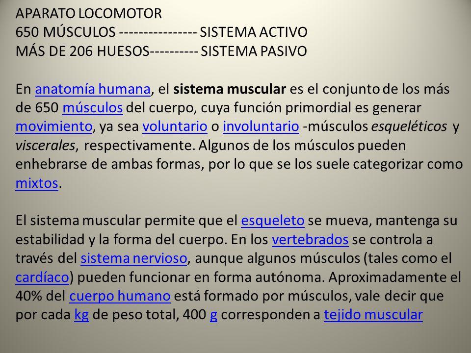 APARATO LOCOMOTOR 650 MÚSCULOS ---------------- SISTEMA ACTIVO. MÁS DE 206 HUESOS---------- SISTEMA PASIVO.