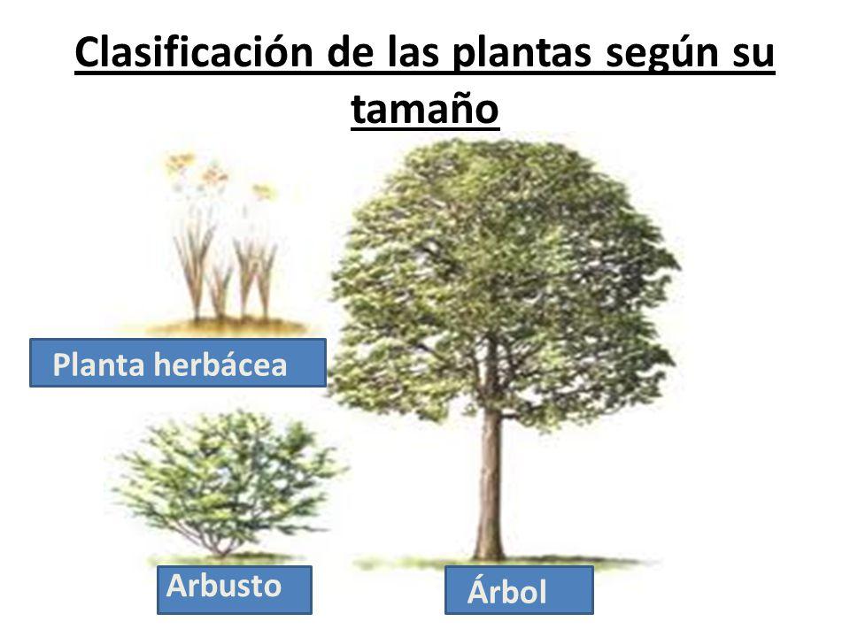 cuidemos las plantas profesoras encargadas karina