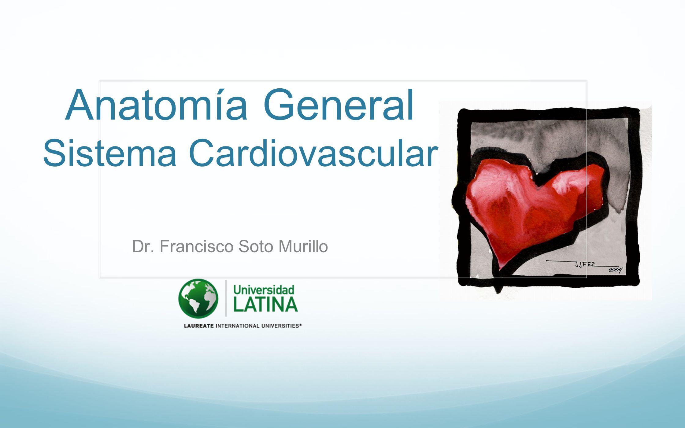 Anatomía General Sistema Cardiovascular - ppt video online descargar