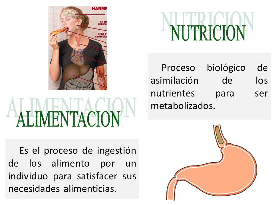 NUTRICION ALIMENTACION