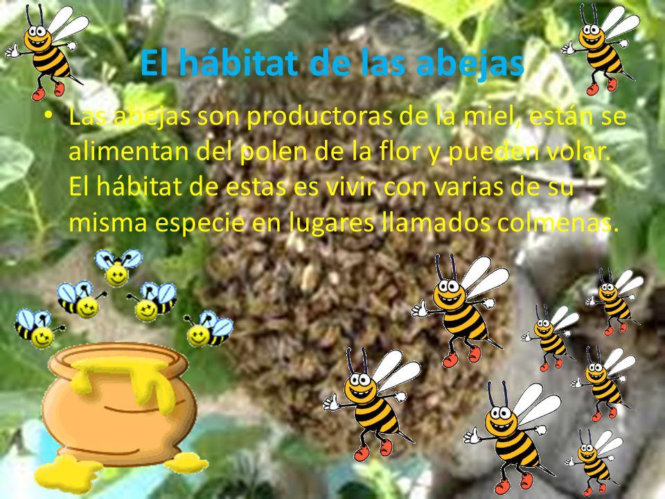 El h bitat de algunos animales ppt descargar for Habitat de la vienne chatellerault
