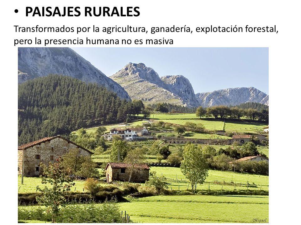 PAISAJES RURALES Transformados por la agricultura, ganadería, explotación forestal, pero la presencia humana no es masiva.