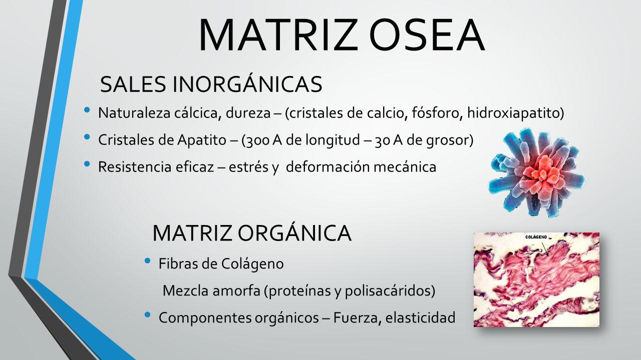 Bonito Definición De Matriz En La Anatomía Composición - Anatomía de ...