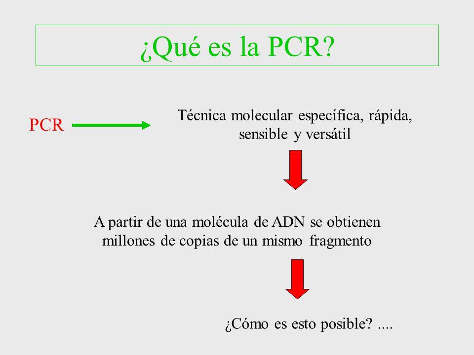 Reacci n en cadena de la polimerasa pcr ppt video for Que es la comida molecular