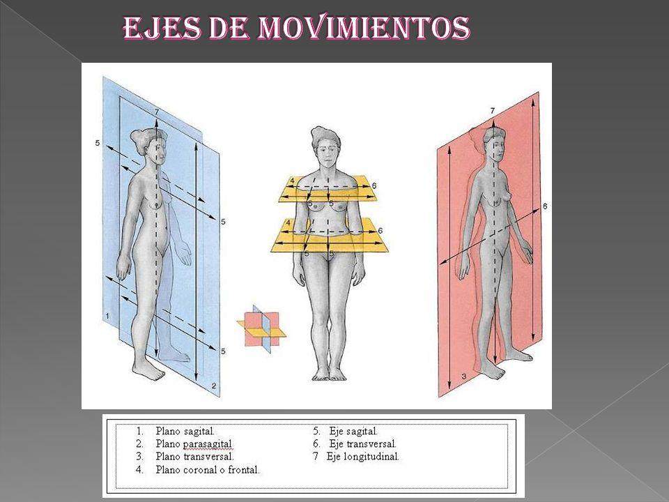 EJES DE MOVIMIENTOS