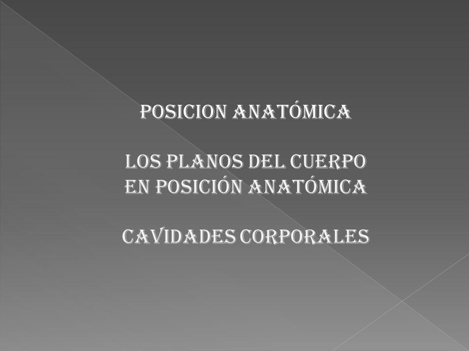 POSICION ANATÓMICA LOS PLANOS DEL CUERPO EN POSICIÓN ANATÓMICA CAVIDADES CORPORALES