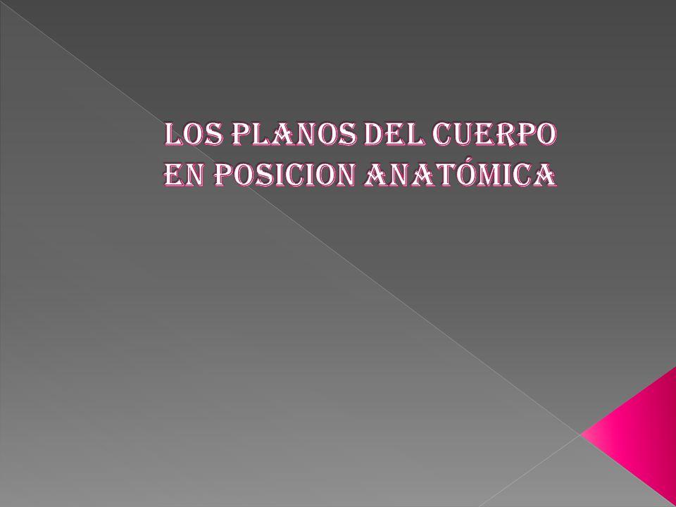 LOS PLANOS DEL CUERPO EN POSICION ANATÓMICA