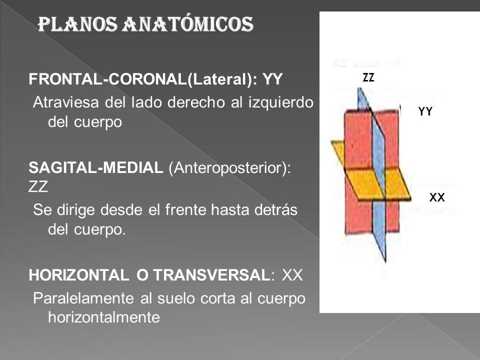 Planos anatómicos FRONTAL-CORONAL(Lateral): YY