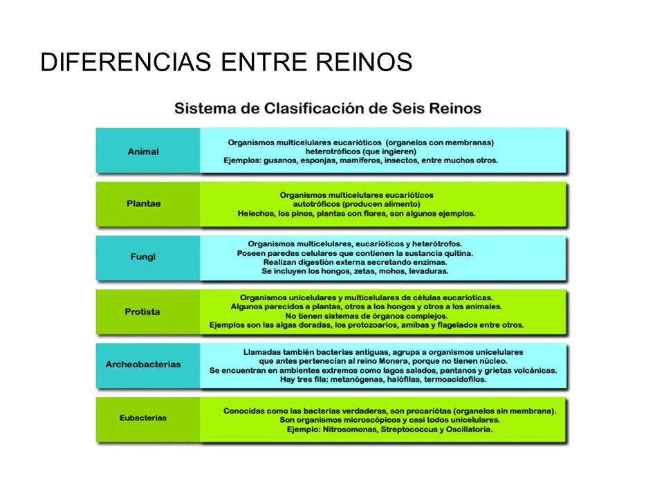 Clasificaci n seres vivos ppt video online descargar for Diferencia entre yeso y escayola