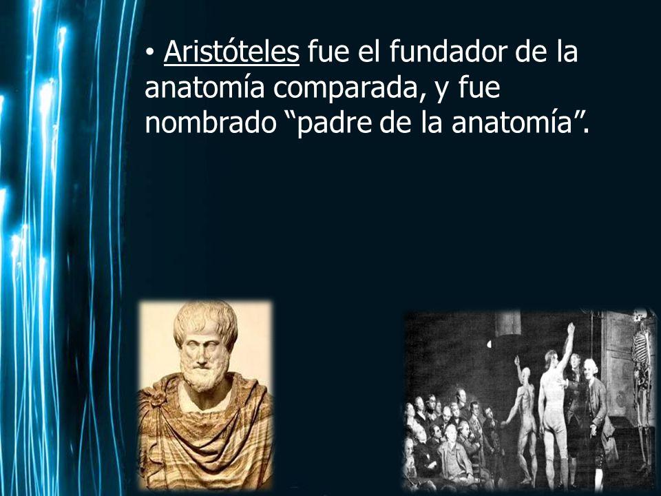Magnífico Padre De La Anatomía Moderna Galería - Anatomía de Las ...